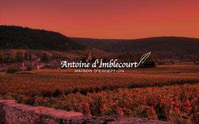 Création d'identité de marque et site internet Antoine d'Imblecourt vins de Bourgogne